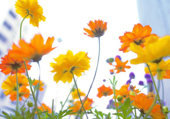写真教室東京11_花の撮り方
