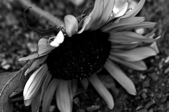 【 写真の撮り方-コツ「花を撮影するときのコツ」】