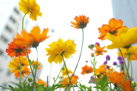 花の撮り方コツ_構図写真教室